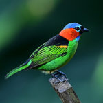 colorful bird sitting on branch
